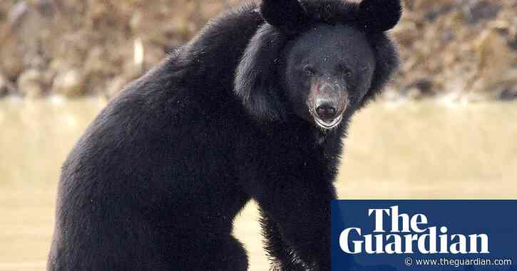 Plea to improve habitat after spate of bear attacks in Japan