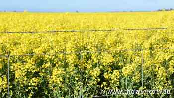 Exciting new non-GM canola traits registered in US