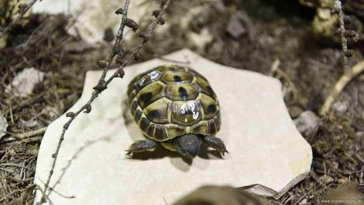 Neufahrn: Verzögerung bei Reptilien-Auffangstation - Süddeutsche Zeitung