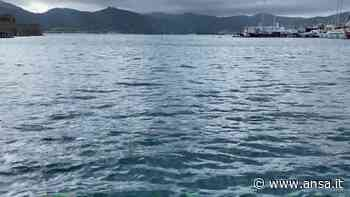 Isola d'Elba, due balenottere avvistate a Portoferraio - Italia - Agenzia ANSA
