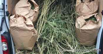 Gignac-la-Nerthe : 61kg de stupéfiants saisis par la police nationale - La Provence