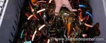 Conflits entre pêcheurs en Nouvelle-Écosse : Ottawa nomme un représentant spécial