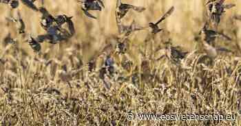 Natuur & Milieu 'Biodiversiteit zal blijven achteruit boeren' - Eos Wetenschap