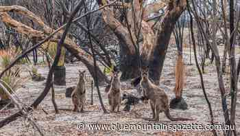 Push for ban on hunting kangaroos in NSW - Blue Mountains Gazette