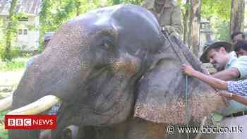 The Indian doctor taking care of thousands of elephants