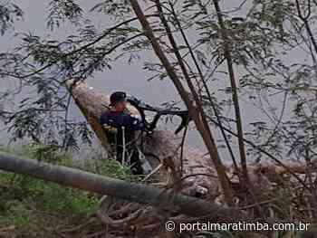 GCM de Cachoeiro encontra chassi de moto roubada dentro do Rio Itapemirim - Portal Maratimba