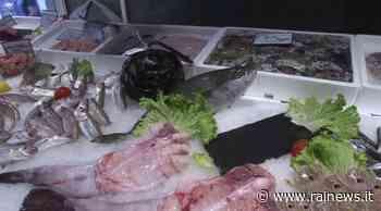 Trenta chili di pesce sequestrato in due ristoranti di Codroipo - TGR Friuli Venezia Giulia - TGR – Rai