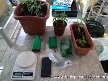 Polícia Civil prende dois por tráfico de drogas em Palmeira das Missões - Rádio Progresso de Ijuí