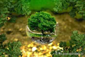 Protección del medioambiente debería ser uno de los temas centrales de una nueva Constitución - El Mostrador