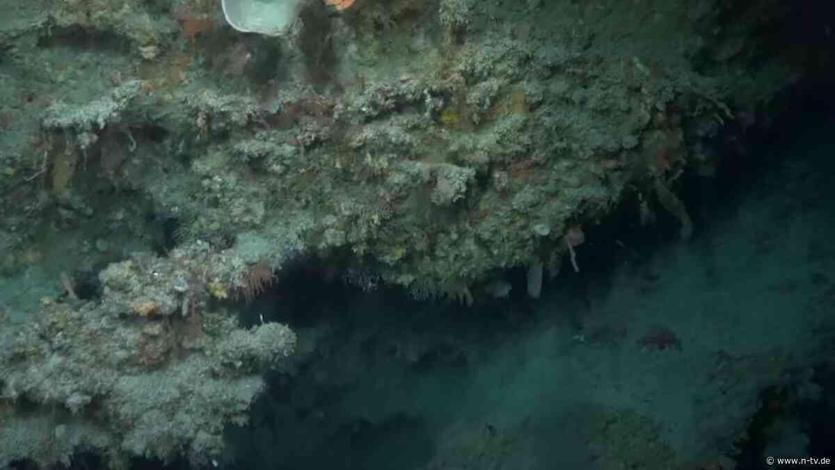 Höher als Empire State Building: Riesiges Korallenriff vor Australien entdeckt