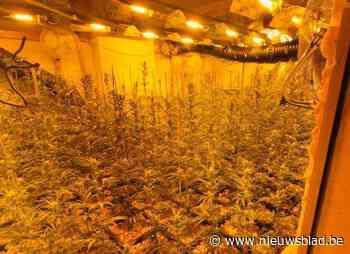 Politie stoot op professionele drugsplantage bij huiszoeking - Het Nieuwsblad