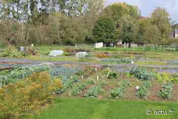 A Craon, des tensions au sein des jardins familiaux provoquent des démissions dans l'association - actu.fr