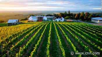Thieves strip vineyard of grapes