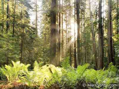 USDA Forest Service Reports on Life-Cycle Assessment of Redwood Lumber