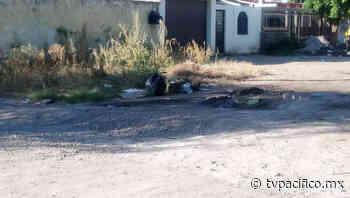 Con maleza y basura la calle Adolfo Ruiz Cortines de la colonia CNOP | La Denuncia | Noticias | TVP - TV Pacífico (TVP)