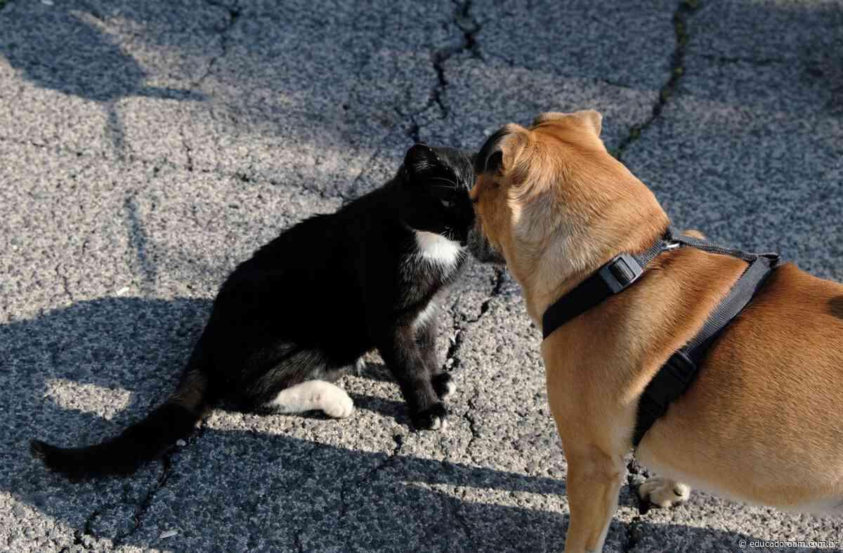 Educadora AM - Cadastro para castração de cães e gatos em Limeira volta na quarta-feira (28) - Educadora