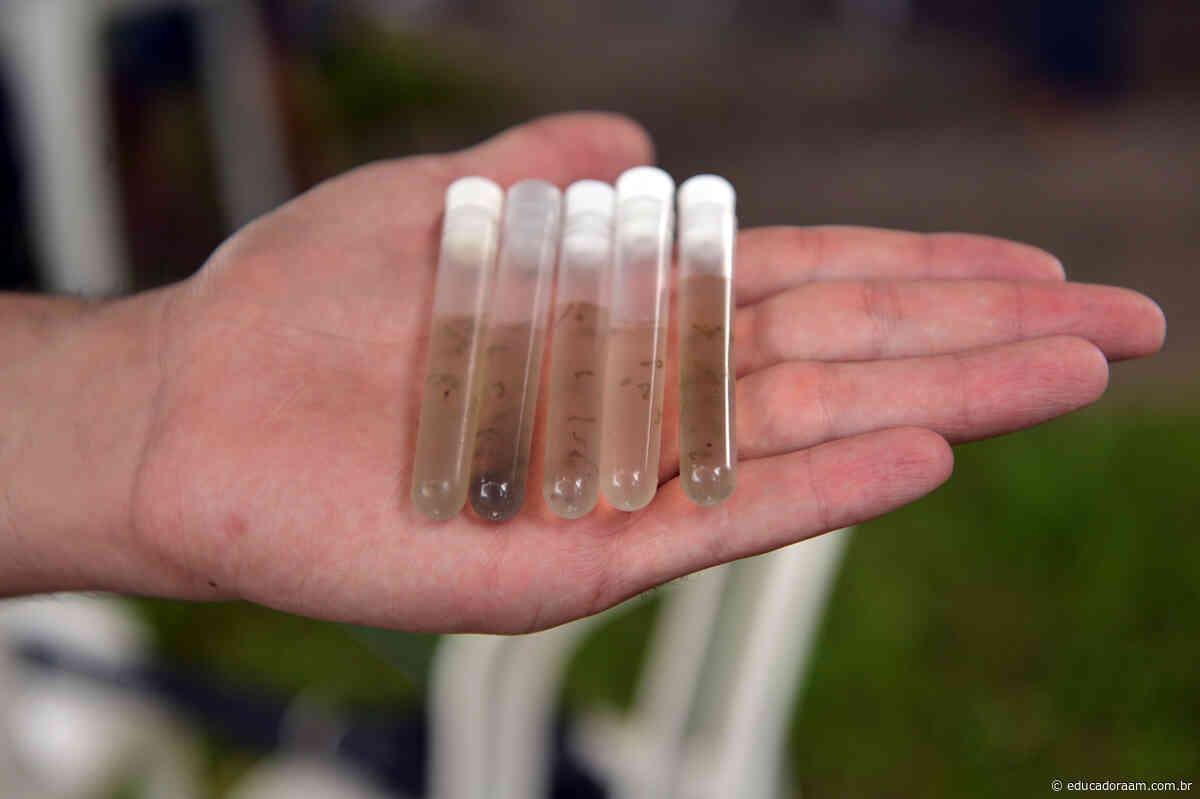 Educadora AM - Mutirão contra dengue visita 2.646 imóveis em Limeira - Educadora