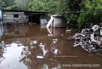 Viviendas y ganado afectados por lluvias en Huimanguillo - tabasco hoy