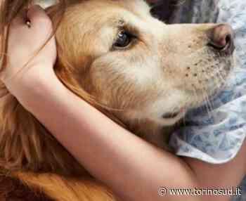 NICHELINO - Se il proprietario è in ospedale per covid, il Comune si prende cura del cane solo - TorinoSud