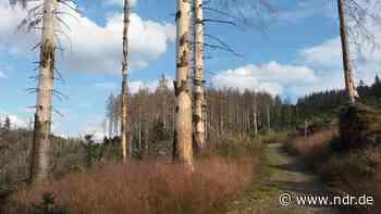 Fichten im Landkreis Goslar werden gefällt - B498 dicht - NDR.de