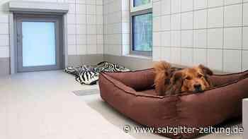 Tierheim-Hunde ziehen in Goslar in ihr neues Domizil - Salzgitter Zeitung