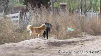 Alerta por envenenamiento masivo de perros en La Llanada - LMCipolletti.com