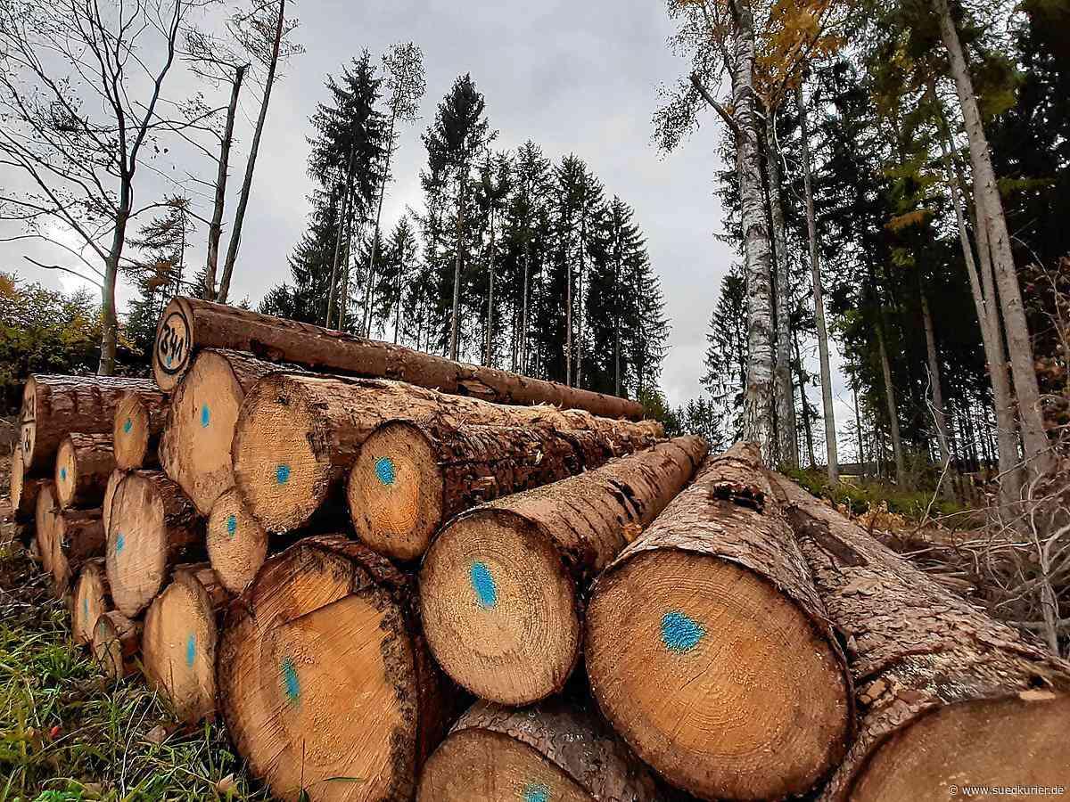 Donaueschingen: Wenn der Wald so richtig leidet: Trockenheit, Sturm und Käfer greifen Forst an - SÜDKURIER Online