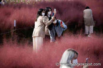 South Koreans offer world lessons on how to tame coronavirus - Bangkok Post