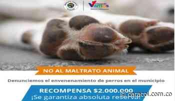 Habitantes de Choachí Cmarca, denuncian envenenamientos masivos a perros - Caracol Radio