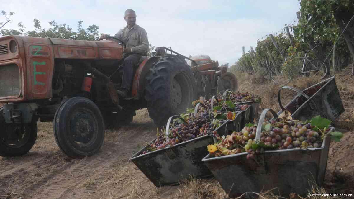 Cosecha 2021: en San Martín creen que llegarán los obreros golondrina - Diario Uno