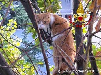 Crespellano: i Vigili del fuoco salvano gatto da albero alto 18 mt. - Modena 2000