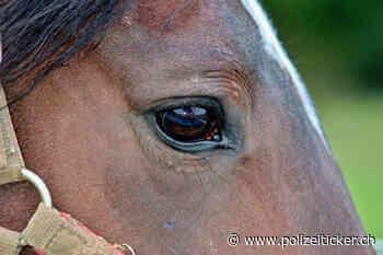 Tierquälerei in Schwalmtal-Hostert - Stute mit Schnittverletzungen an der Brust - Polizeiticker.ch