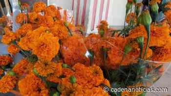 Florerías sin ventas este día de muertos en Mexicali - Cadena Noticias