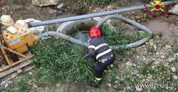 Sacile, i pompieri liberano una nutria - Il Friuli