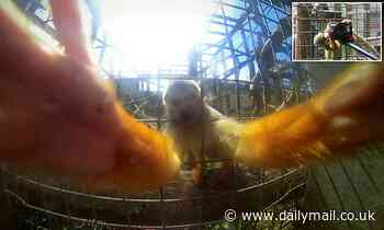 Zoo visitor has a tug of war with inquisitive squirrel monkey after it makes a grab for his camera