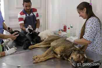 Cadastro para castração de cães e gatos é retomado em Limeira - G1