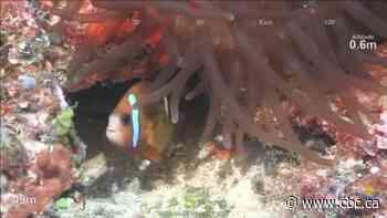 New coral reef taller than Eiffel Tower found off Australian coast