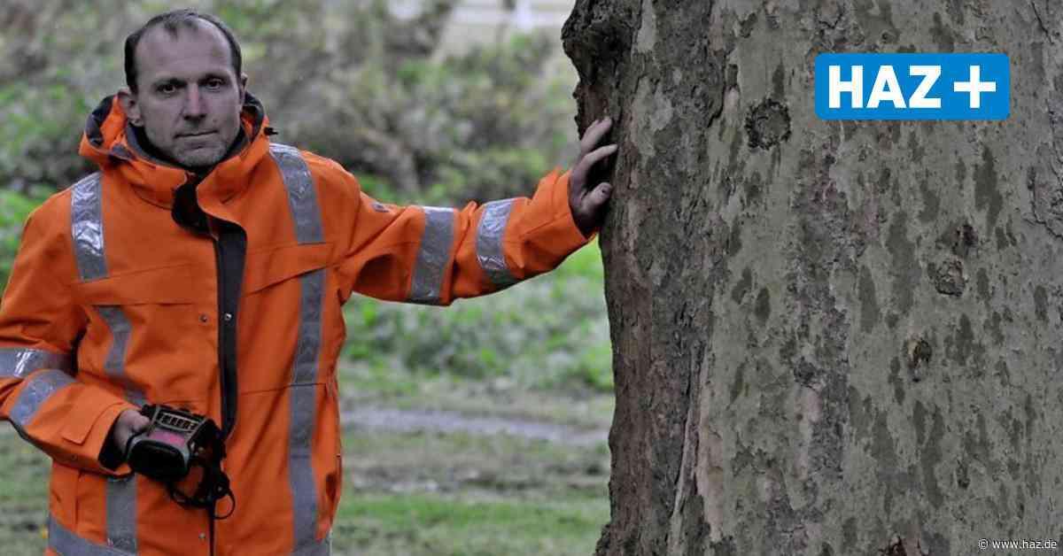 Burgdorf Stadtgärtner kontrolliert 15.000 Bäume in der Stadt auf Astbruch und Mangelerscheinungen - Hannoversche Allgemeine