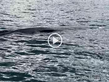 Isola d'Elba, due balenottere avvistate a Portoferraio - Corriere della Sera