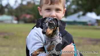 Work to establish off leash dog area in Raymond Terrace's Boomerang Park underway - Port Stephens Examiner