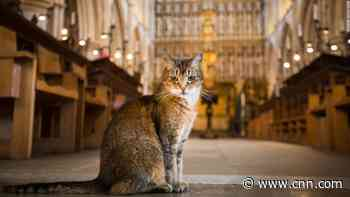 Cathedral hosts memorial service after resident stray cat dies