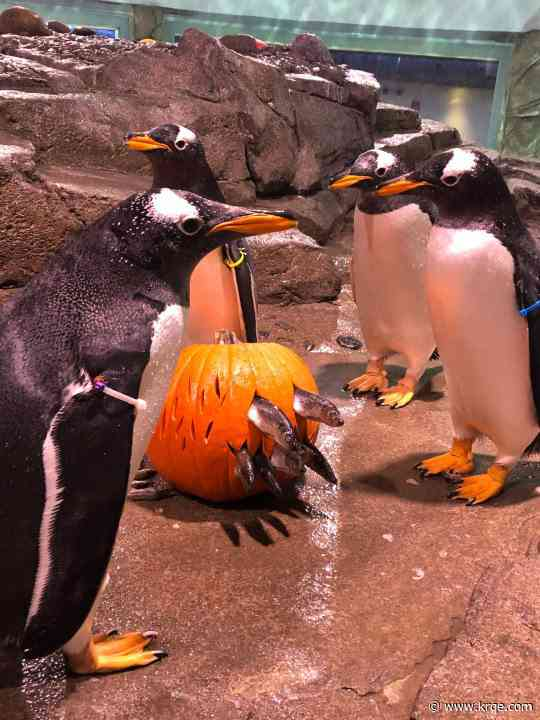 BioPark penguins get into the Halloween spirit