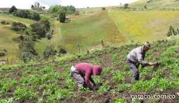 30 mineros de Risaralda cambiarán la minería ilegal por la agricultura - Caracol Radio