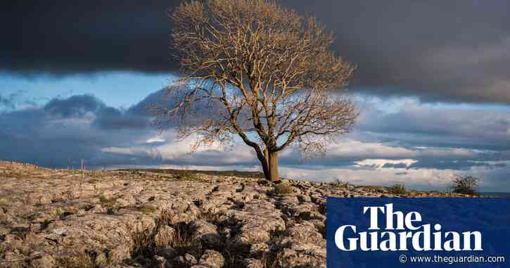 My favourite tree: readers' travel tips