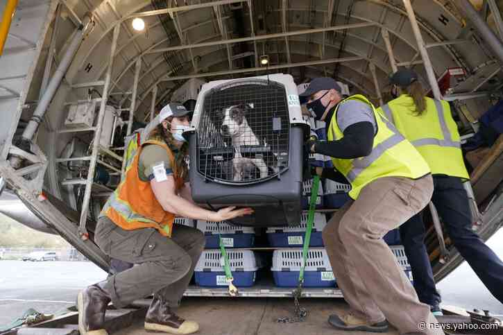 Hundreds of shelter dogs, cats flown across the Pacific