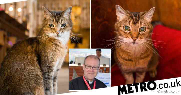 Southwark cathedral holds memorial for beloved stray cat