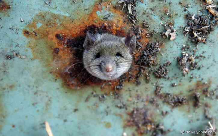 Man falls through New York City pavement into 'rat-filled chasm'