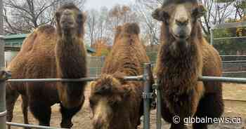 Some animals at Riverview Park and Zoo in Peterborough might be lonely during the pandemic