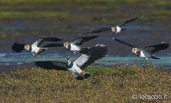 Lombardia, caccia sospesa nei siti Natura 2000 di Brescia, Cremona e Lecco • IoCaccio.it - IoCaccio.it