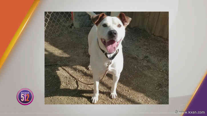 Meet Our Pet Of The Week: Wylie